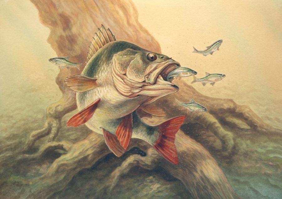 рыболовная тематика
