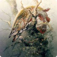 Рыболовные рисунки
