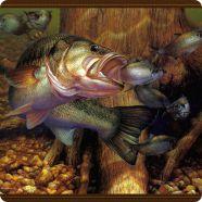 Картины подводного мира