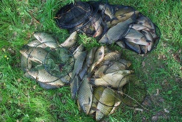 озеро садок рыбалка