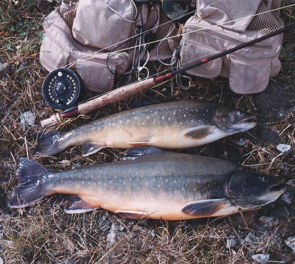 какая рыба клюет в мае на оби