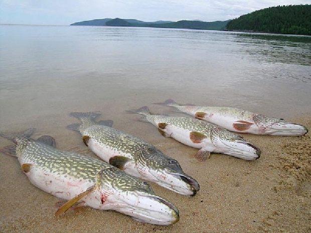 рыбалка на вале удмуртия видео
