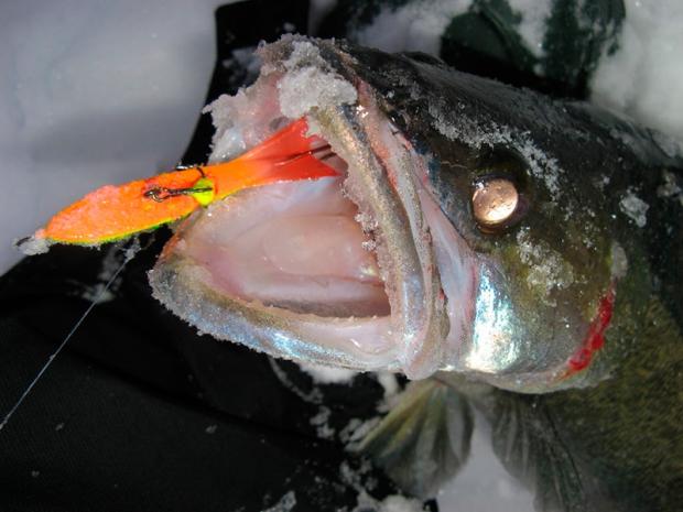 Зимняя ловля судака. Эффект смены приманки