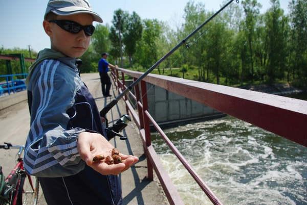 Перспективное место для ловли голавля на майского жука