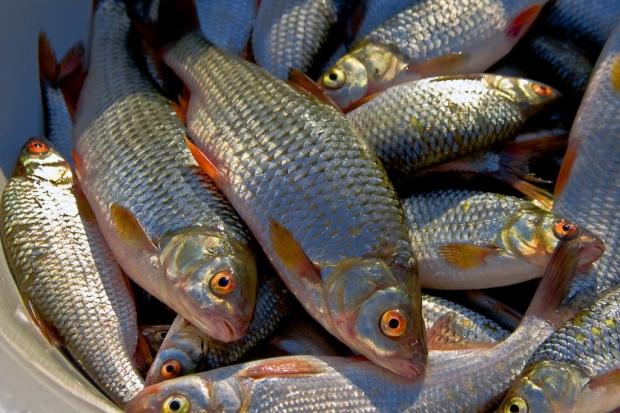 Успешная рыбалка зависит от многих факторов