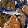 Край непуганных рыб