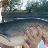 Ловля сома в прудах и озерах