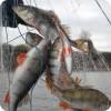 В. Путин считает необходимым ужесточить наказание за незаконный вылов рыбы